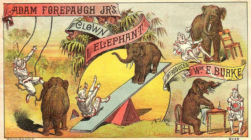 forepaugh clown elephant picaninny